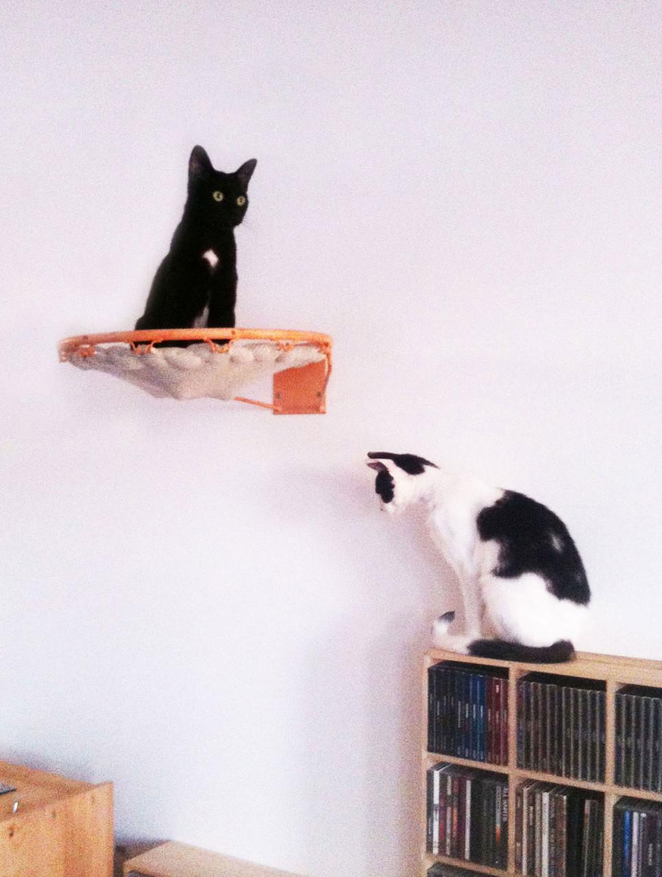 cat_basket_basketball_annienke_1