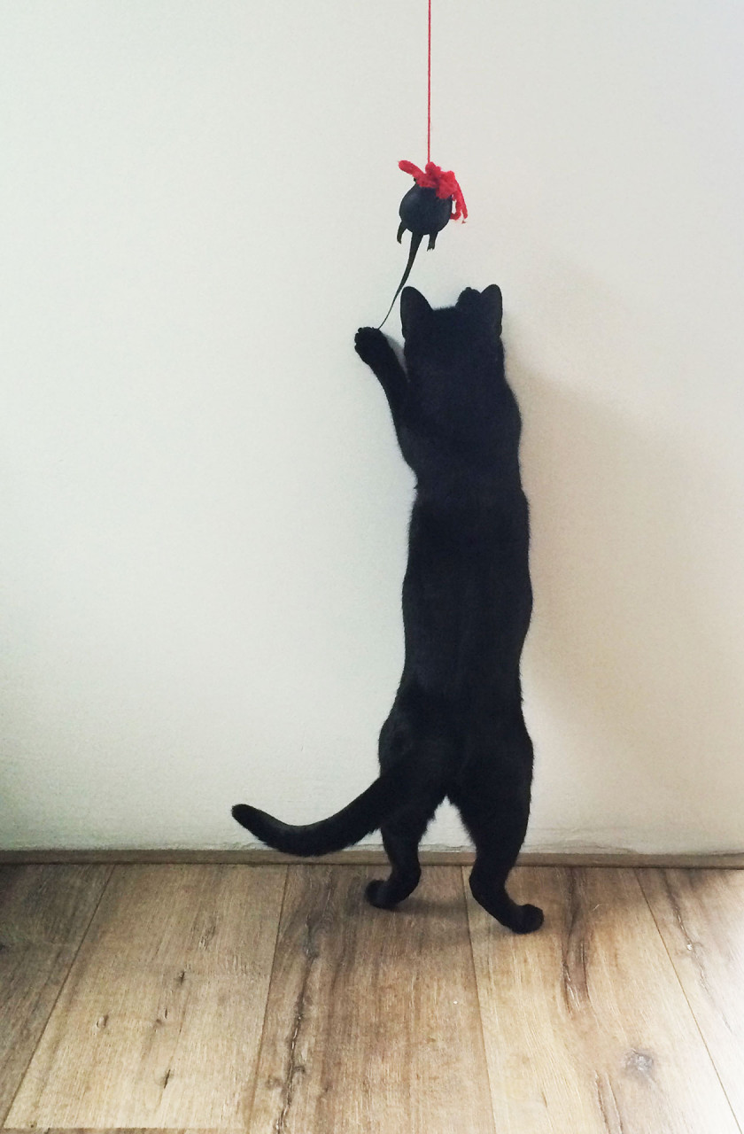 cat_toy_mouse_roe_play