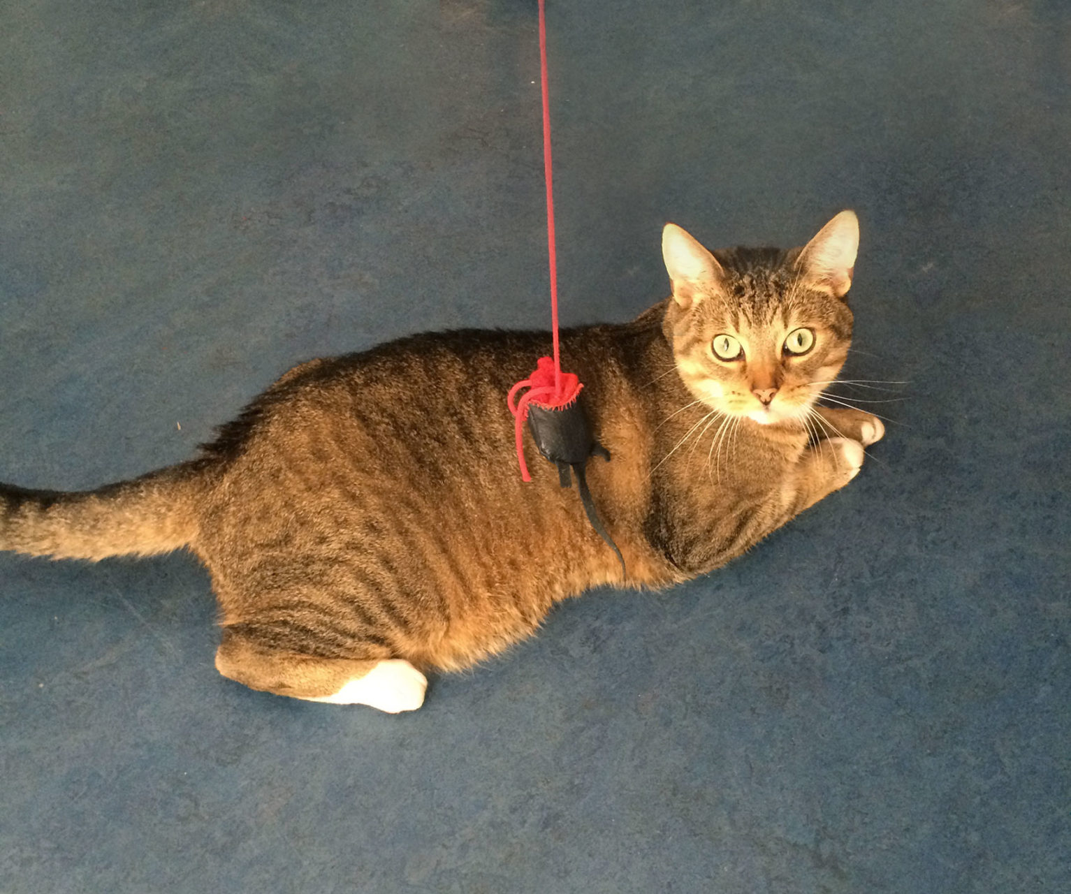 happy_cat_customer_fred_cattoy_annienke