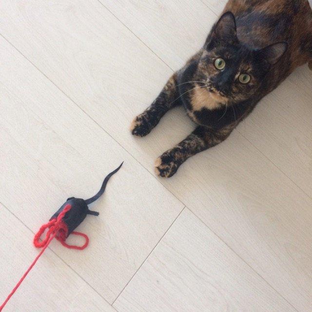HAPPY CAT CUSTOMERS